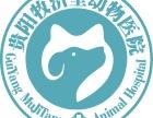 贵阳靠谱的犬猫绝育宠物医院-贵阳牧济堂动物医院
