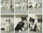 猫舍整体转让所有猫咪对外出售