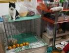 自家养的小猫 各种名猫 价格百元到几百元 价格合理