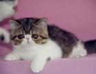 哪里有波斯猫 多少钱