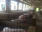养猪场地四栋出租