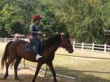 中山周边可以学骑马的好地方,可以自由骑的