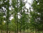 出售各种绿化苗木,花灌木,承接绿化工程