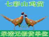 东升禽苗孵化公司专业供应贵州土鸡苗 贵阳鸡苗批发价格