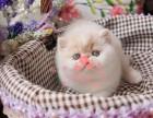 南京哪里卖加菲猫较便宜多少钱一只 购买包健康多久