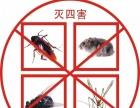 桂林专业杀虫灭鼠,除蟑螂,除甲醛公司