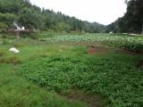 重庆市巴南区姚熊蔬菜种植场