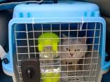 温州活体宠物托运 行程投食加水全程跟踪