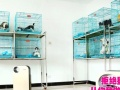上海爱宠到家宠物旗舰店开业【宠物洗澡美容】优惠多多