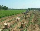 海南最大水果果园批发直供招收微商代理电商代理