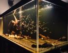 鱼缸维护 水族箱设计 鱼缸造景