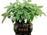 北京海淀鮮花婚慶 鮮花綠植批發