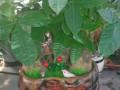 沙井专业绿植租摆,园林绿化,绿化养护,各种花卉盆栽