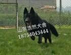 正规养殖厂 纯种东德牧羊犬 价格优惠 品相**