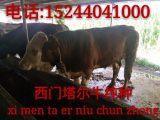 哪里有卖西门塔尔牛的 西门塔尔牛的价格