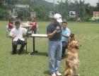 北京專業寵物訓練學校 不體罰可上門學期短包教會