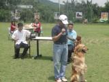 北京专业宠物训练学校 不体罚可上门学期短包教会