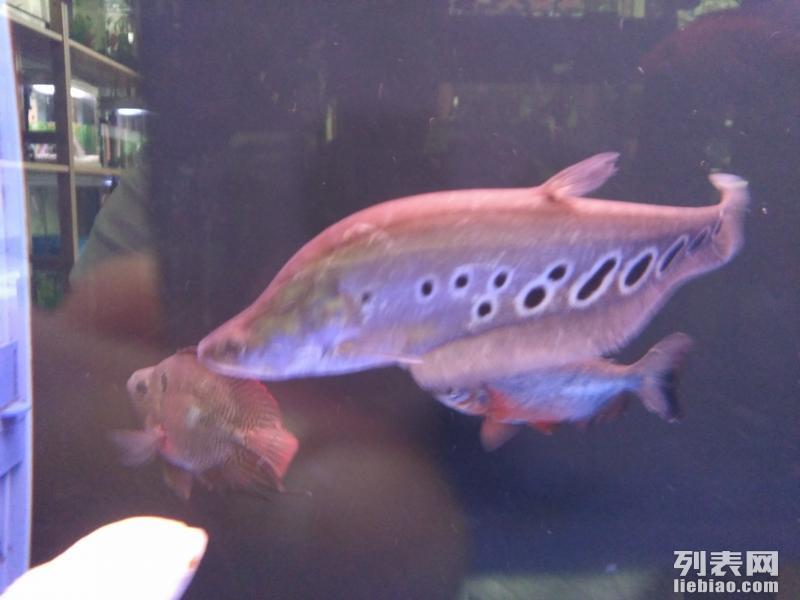 鱼缸 水族箱 观赏鱼 罗汉 金龙 发财鱼专卖店