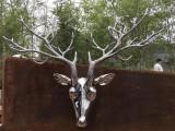 广州金属制品定制不锈钢亮光鹿头雕塑