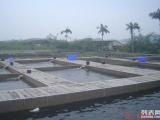 潮州海秀锦鲤养殖场