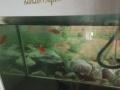 生态鱼缸超低价处理