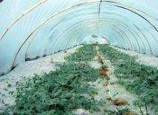 质量好的黄瓜专用膜品牌介绍 -优质的农膜