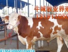山西祁县黄牛交易集市育肥牛价格