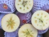代销代卖水果
