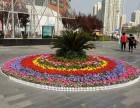 北京绿植租摆 园林绿化工程 鲜花配送 花坛设计