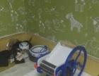 家庭用品压面机