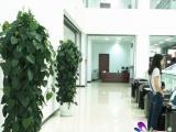【名卉源】郑东新区高端单位租花,绿植租摆