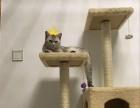 家养鱼骨纹母猫