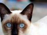 九 · 舍 出售各品种名猫