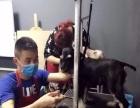 学宠物美容,开宠物美容店,就到济南乐秀宠物美容培训学校