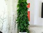 专业绿植租摆,鲜花绿植租赁,会场鲜花绿植配送