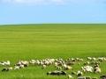 敖镇牙什木都 土地 2500亩草原