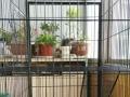 三层猫笼子刚用了一个月