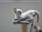 成都宠物猫一手养户批发招代理