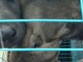 肉狗养殖成本及养殖利润加盟 养殖 投资1万元以下