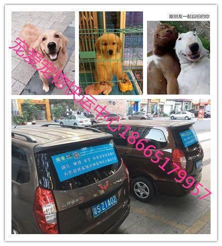 广州到全国宠物空运,随机托运 检疫证代办 火车托运全国连锁