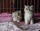 可爱的加菲猫