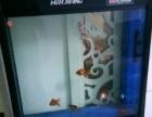 黑色大鱼缸带鱼出售