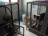 家庭宠物寄养价格35