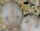 养殖基地出售各种小宠,包活一年并且批发各种鼠粮兔粮