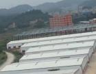 园洲独院单一层钢构厂房3000平米出租