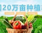 望家欢农产品集团湛江地区单位食堂食材配送
