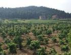 绵阳市梓潼县长卿镇中心村60亩农场低价出售
