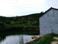 养猪厂和鱼塘出租