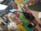上海徐汇区羊驼出租-草泥马租赁-神兽转租-展览庆典暖场