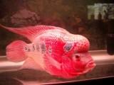 北京清洗鱼缸 清江水族鱼缸养护观赏鱼护理